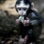 animais-macaco-38b458