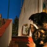 cane-e-gatto-300x225