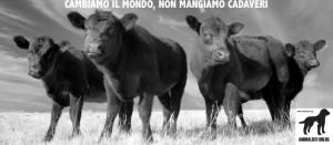 18_cattle