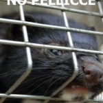 no-pellicce