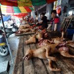 presidio-animalisti-onlus-no-yulin2