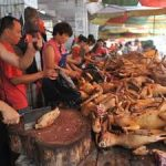 presidio-animalisti-onlus-no-yulin4