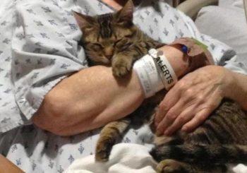 Animali in ospedale