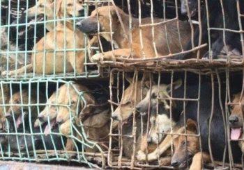 Da Yulin al benessere animale