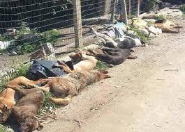 Le ignobili morti dei cani di Sciacca