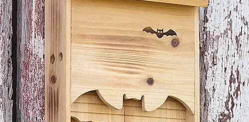 Addottiamo un Pipistrello