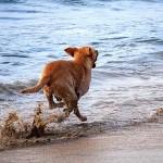 cane-corre_mare