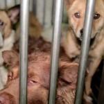 stray dogs latino