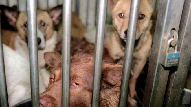 Leggi sulle uccisioni di animali
