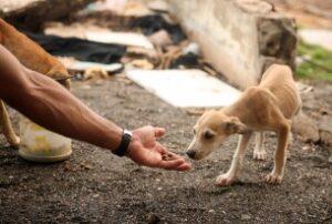 La legge punisce chi maltratta gli animali