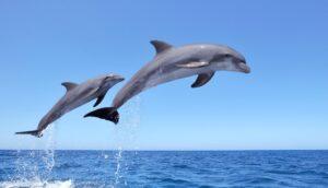 Delfini, persone non umane