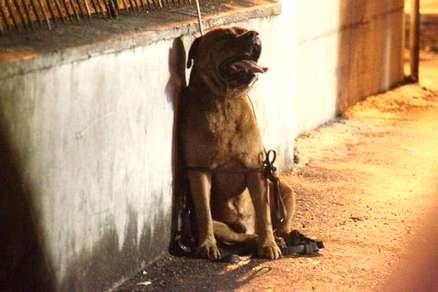 Denunce per il maltrattamento degli animali