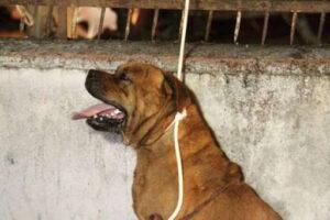 Cane morto soffocato davanti alla polizia a San Basilio - Roma