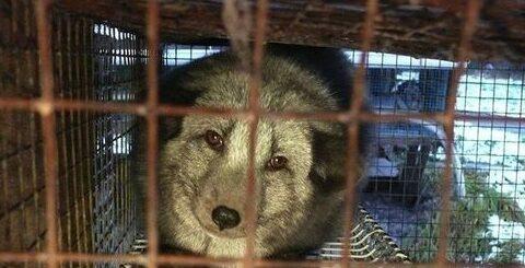 Comunicato Stampa Animalisti - Corteo Pavia 5 ottobre 2013