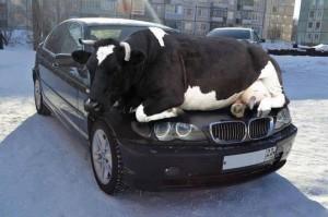 Animalisti attenti agli animali infreddoliti, diffondete in rete