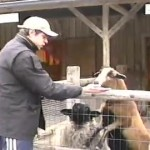 animalismo-sociale
