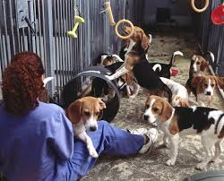 Briefing informativo degli animalisti