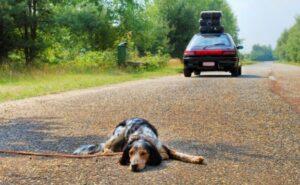 Denunciamo e segnaliamo gli Animali in difficoltà
