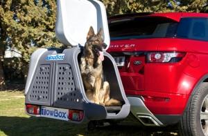 tow box dog