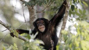 Richiesta di collaborazione Animalisti Onlus - Università Insubria