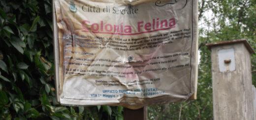Segrate, rogo nella colonia felina di via Tiziano