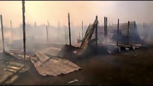 Rifugio Italia a Kiev incendiato, arsi vivi 70 cani