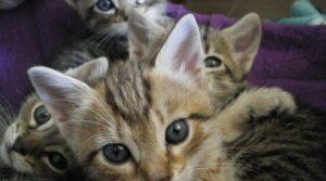 Processo a Bergamo per il serial killer dei gatti