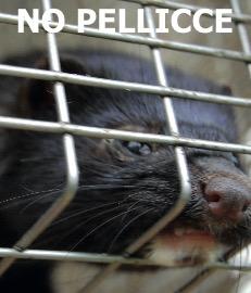 Corteo Nazionale a Pavia contro gli aguzzini degli Animali