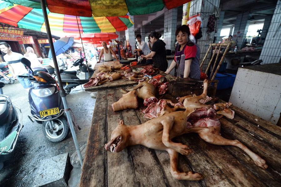 Morire a Yulin, morire nel mondo