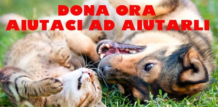 donazione animali