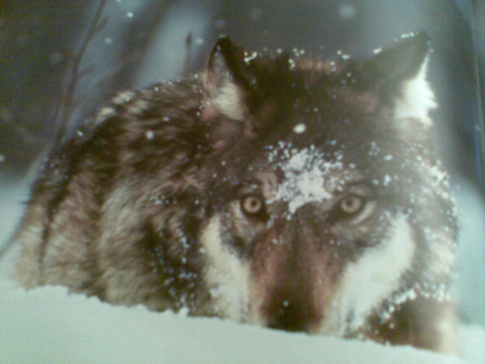 difendiamo il lupo animalisti onlus