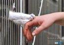 Convegno maltrattamento animale e pericolosità sociale