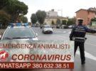 Animalisti Onlus Italia