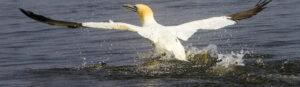 Le ali della libertà