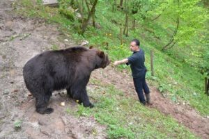 La liberazione degli orsi trentini un obbligo morale