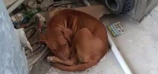 Morto Tyron cucciolo impiccato da tre gelesi