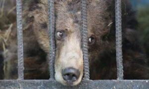Orsi Casteller: Noi Orsi LIberi e il giuramento dei veterinari