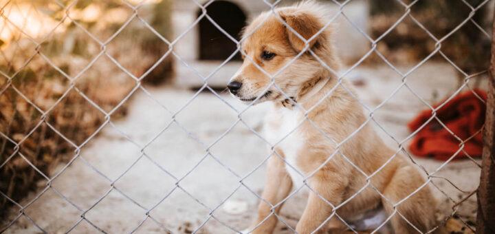 animalisti-ets-protezione-animali