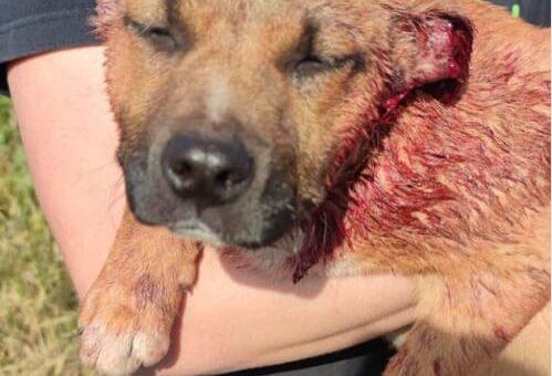 Bullismo, tutelare gli Animali dai gesti violenti dei minori